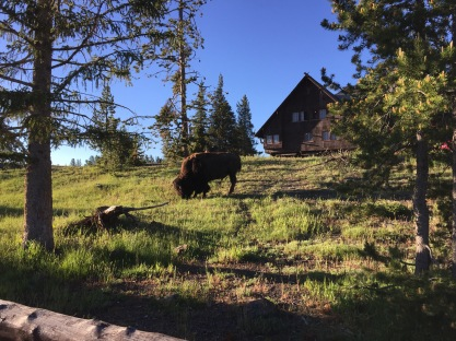 Friends in the front yard and the back yard at Old Faithful Inn